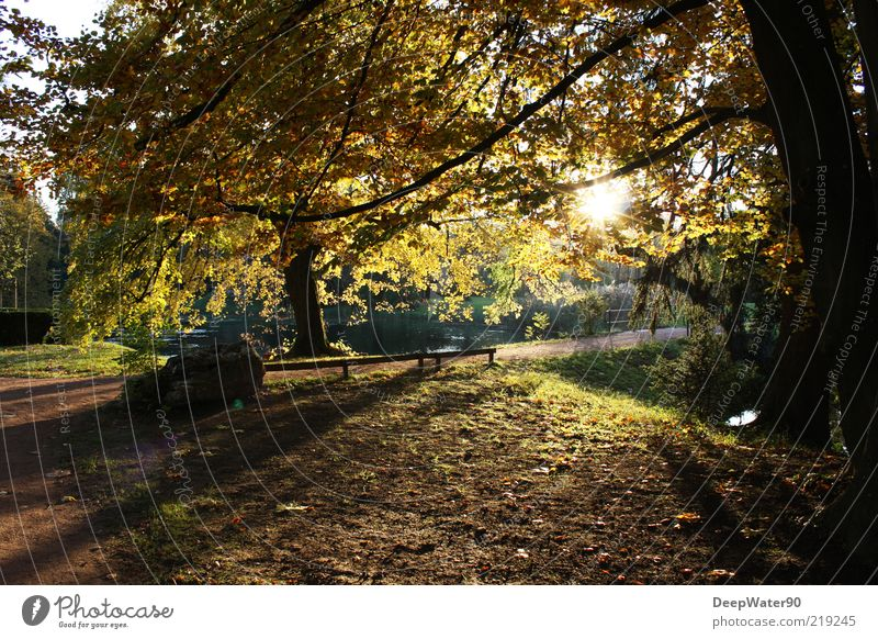 Nature Green Water Sun Tree Yellow Autumn Emotions Lanes & trails Grass Freedom Brown Moody Park Contentment Air
