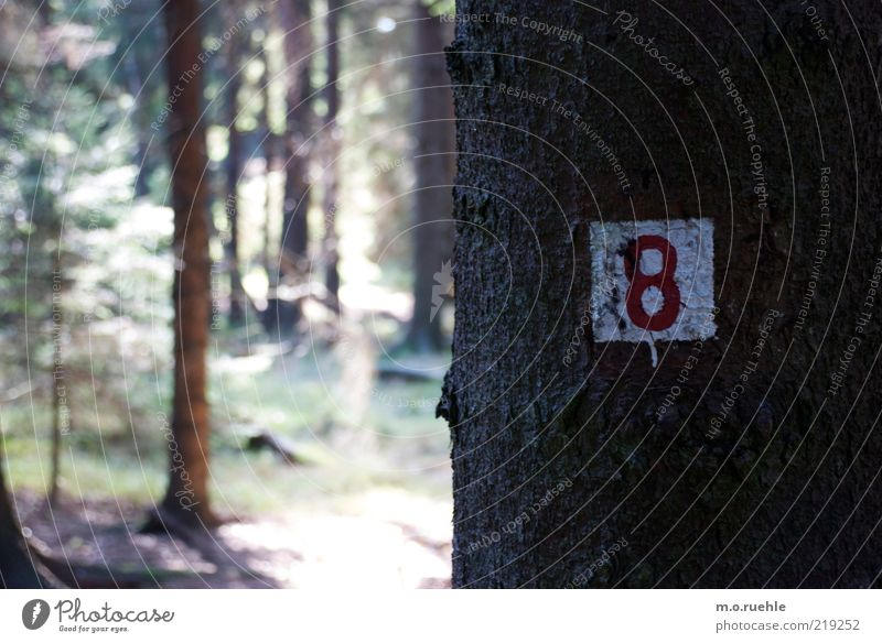 path number Nature Landscape Plant Beautiful weather Tree Forest Wood Sign Digits and numbers Signs and labeling Red White 8 Colour photo Exterior shot Detail