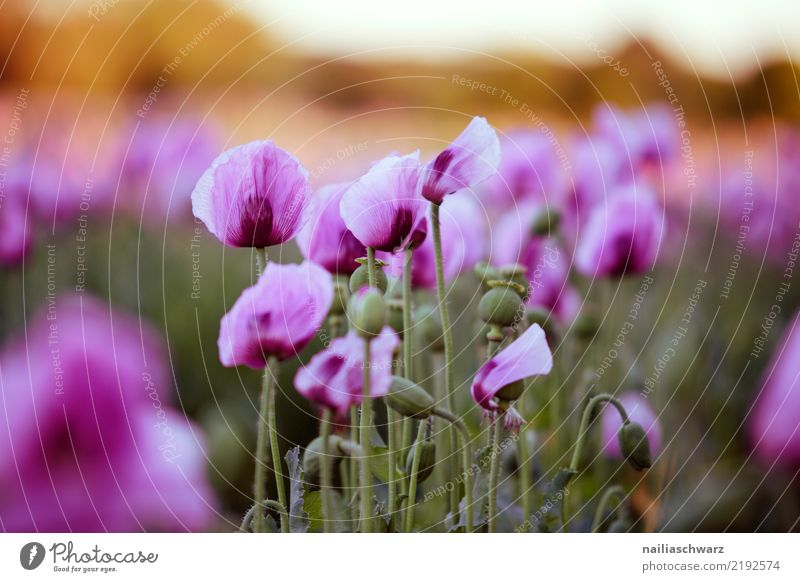 Nature Summer Plant Colour Beautiful Landscape Flower Life Environment Blossom Spring Natural Meadow Germany Garden Park