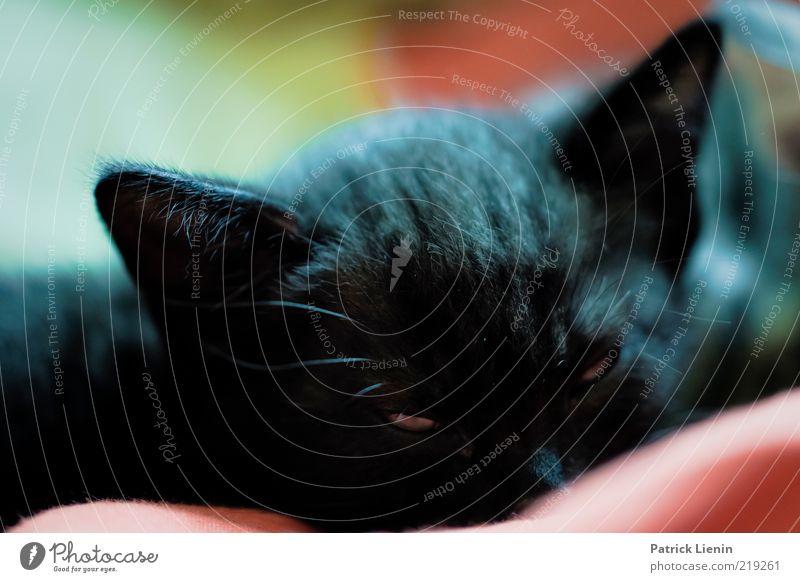 Beautiful Black Animal Relaxation Cat Think Funny Elegant Sleep Ear Soft Animal face Lie Observe Curiosity
