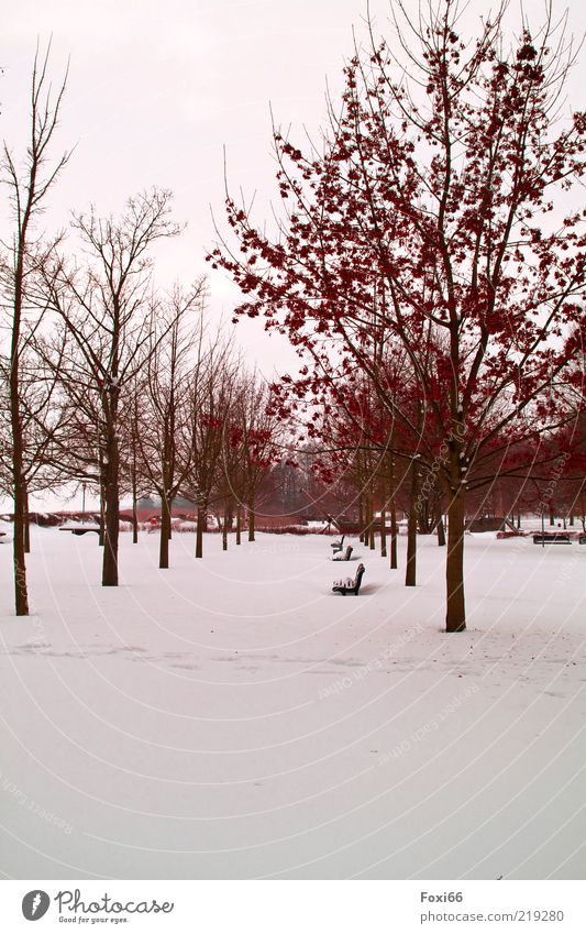 brave the winter Air Winter Ice Frost Tree Park Deserted Lanes & trails Beautiful Brown Red White Loneliness Environment Colour photo Exterior shot
