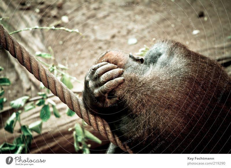Leaf Animal Yellow Relaxation Head Brown Power Rope Sleep Cool (slang) Lie Wild Pelt Zoo To hold on Wild animal