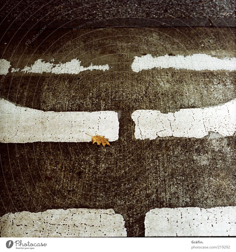 [HH 10.1] Lonely Leaf Deserted Street Lie Broken Gloomy Under Gray Black White Transience Change Destruction Asphalt Zebra crossing Colorless Traffic lane
