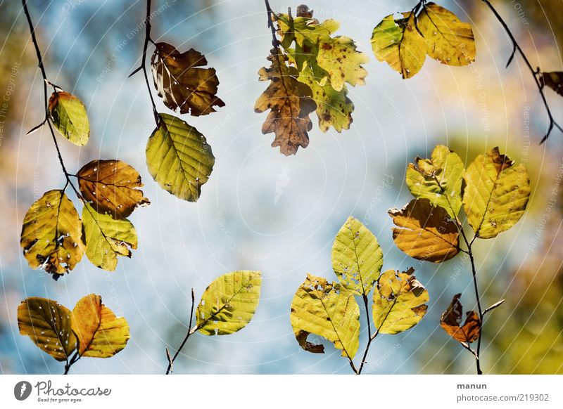 INTEGRATION Nature Autumn Tree Leaf Twigs and branches Beech leaf Oak leaf Autumnal Autumnal colours Natural Above Beautiful Perspective Change Colour photo