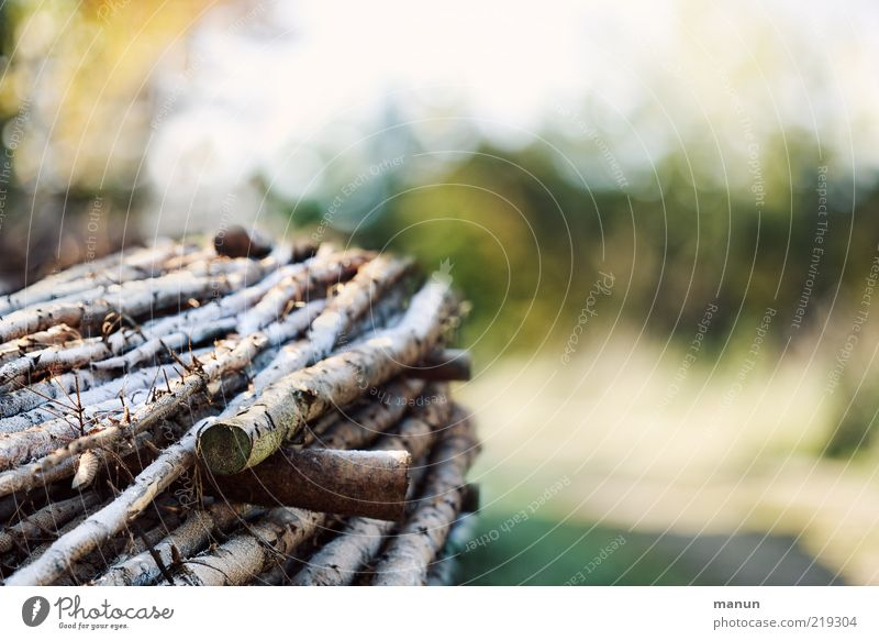 Tree Autumn Wood Tree trunk Stack Sustainability Hoar frost Firewood Ice Raw materials and fuels Stack of wood Log