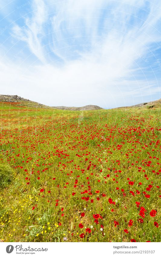Crete - Greece - Poppy meadows of Prevelhi Preveli Flower meadow Blossom Blossoming Nature Vacation & Travel Travel photography Idyll Card Tourism Sunbeam