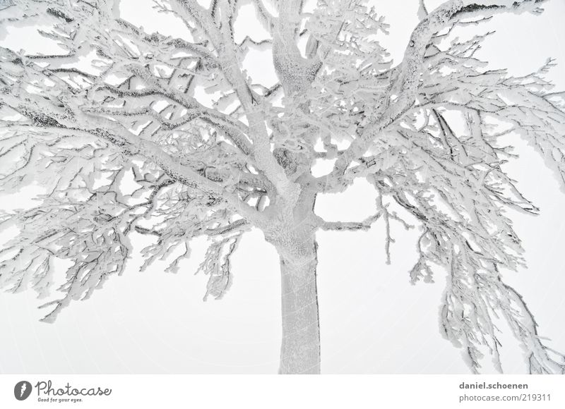 Tree Winter Cold Snow Ice Bright Fog Frost Climate Branch Partially visible Hoar frost Section of image Plant Leafless