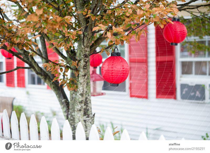 Christmas tree Autumn Tree Detached house Exceptional New England Lampion Glitter Ball Christmas & Advent Hallowe'en Illuminate Idyll Colour photo Multicoloured