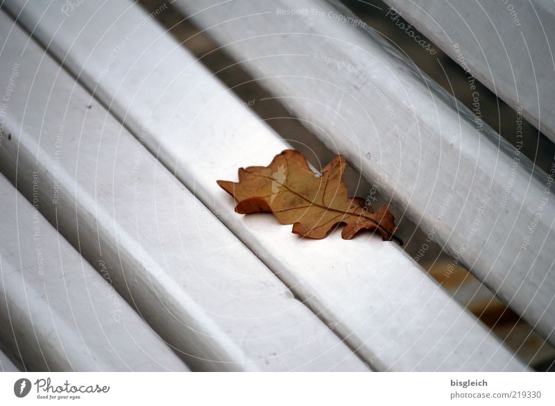 Old White Calm Leaf Autumn Brown Bench Transience Lose Autumn leaves Autumnal Wooden bench Oak leaf End of the season