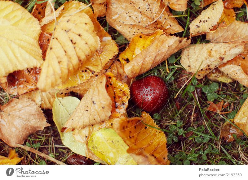 #AS# *NEWS* Autumn on the ground! Art Work of art Esthetic Autumnal Autumn leaves Autumnal colours Early fall Automn wood Autumnal weather Autumnal landscape