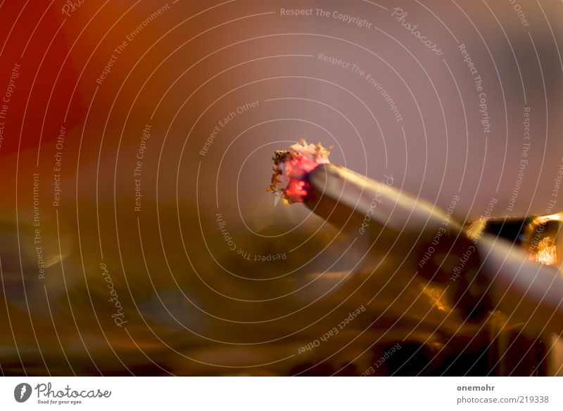 White Red Calm Relaxation Brown Near Soft Smoking Transience Hot Smoke Burn Cigarette Embers Ashes Ashtray