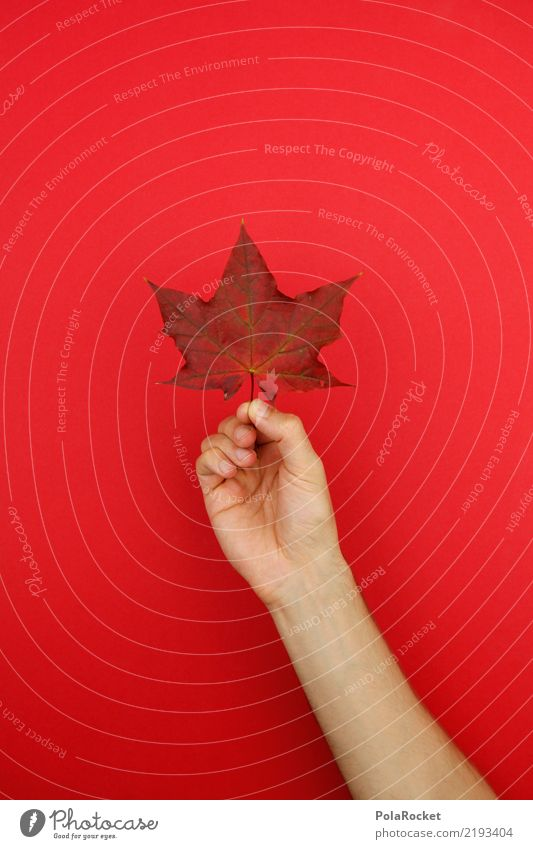 #AS# Autumn Holder Art Work of art Esthetic Leaf Autumnal Autumnal colours Autumn leaves Early fall Automn wood Autumnal weather Autumn wind Colour photo
