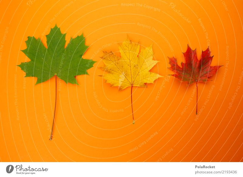 #AS# Autumn Three Art Work of art Esthetic 3 Autumnal Autumn leaves Autumnal colours Early fall Automn wood Orange Green Yellow Red Maple leaf Colour photo