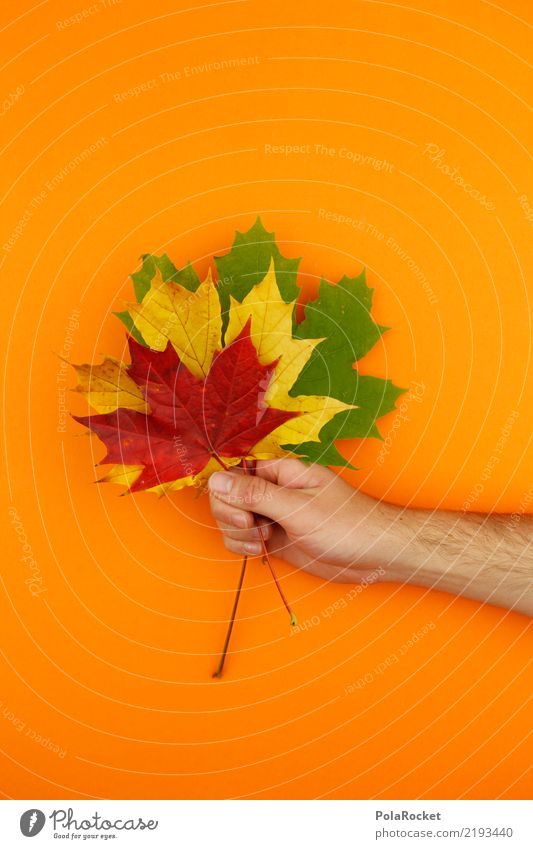 #AS# Autumn greeting Nature Esthetic Leaf Maple leaf Red Yellow Green Orange To hold on Ostrich Autumnal Autumn leaves Autumnal colours Early fall 3