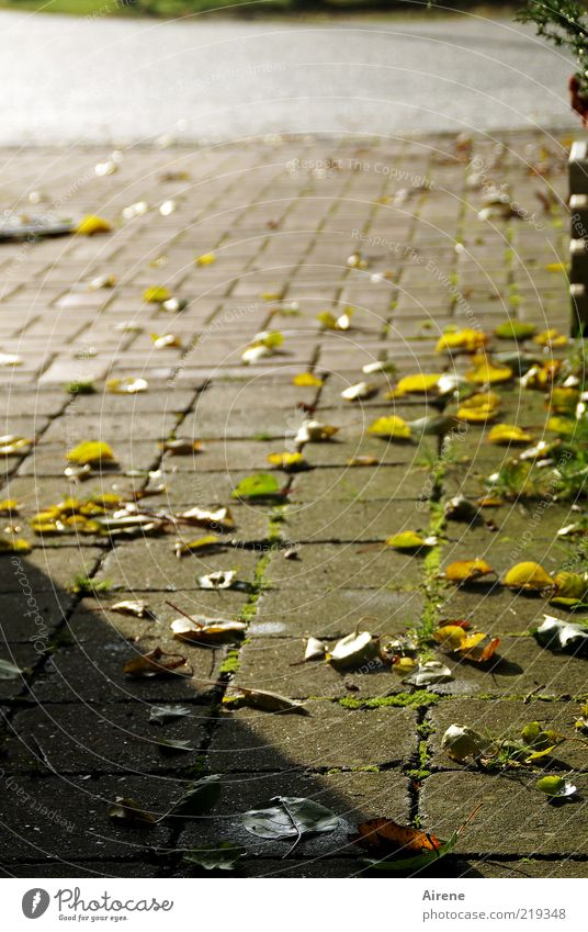 two more southern days Autumn Places Street Autumn leaves Lanes & trails Paving stone Stone Yellow Gold Gray green Pink Longing Loneliness Calm Infinity