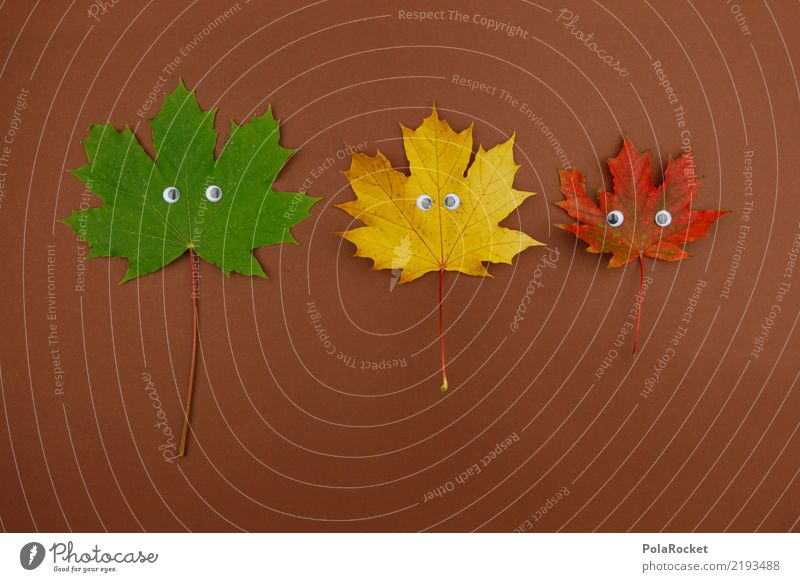 #AS# crazy for autumn Nature Esthetic Leaf Eyes Maple leaf Autumn Autumnal Autumn leaves Autumnal colours Early fall Automn wood Autumn wind 3 Green Yellow Red