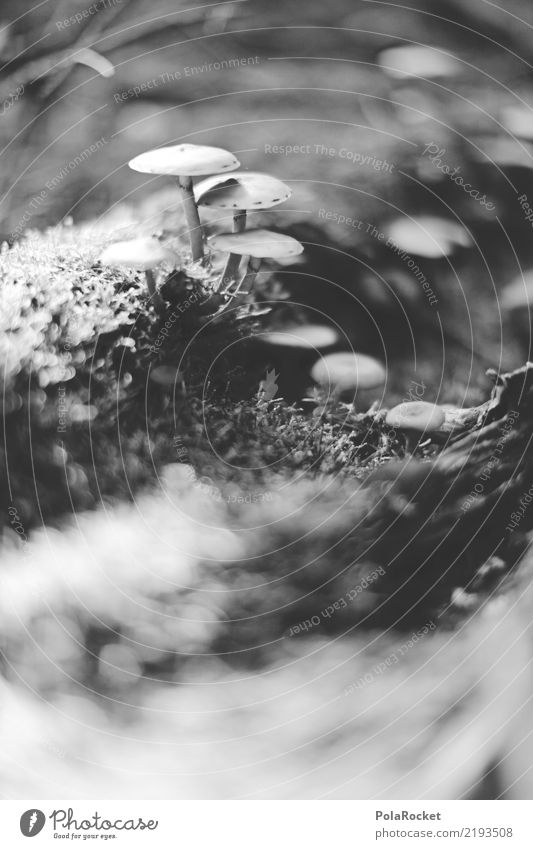 #AS# clearing of mushrooms Environment Nature Plant Esthetic Mushroom Growth Clearing Blur Woodground Wayside Mushroom cap Mushroom picker Beatle haircut