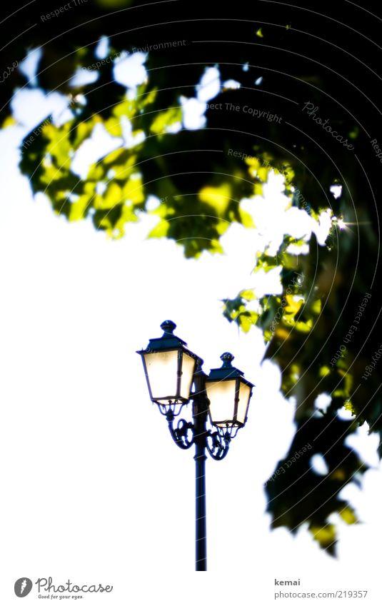 Nature Old Sky Tree Sun Green Plant Summer Lamp Bright Elegant Environment Esthetic Illuminate Lantern Beautiful weather
