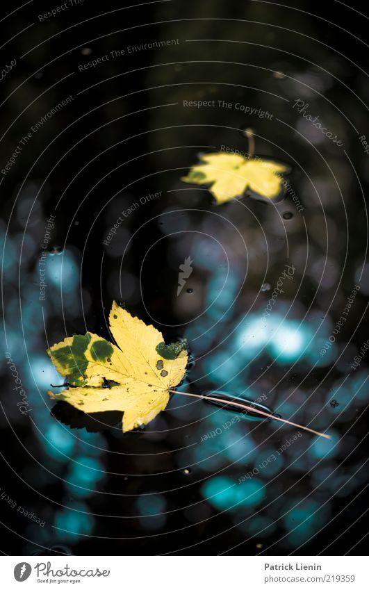 Nature Water Beautiful Plant Leaf Autumn Lake Moody Bright Weather Environment Wet Esthetic Illuminate Fluid