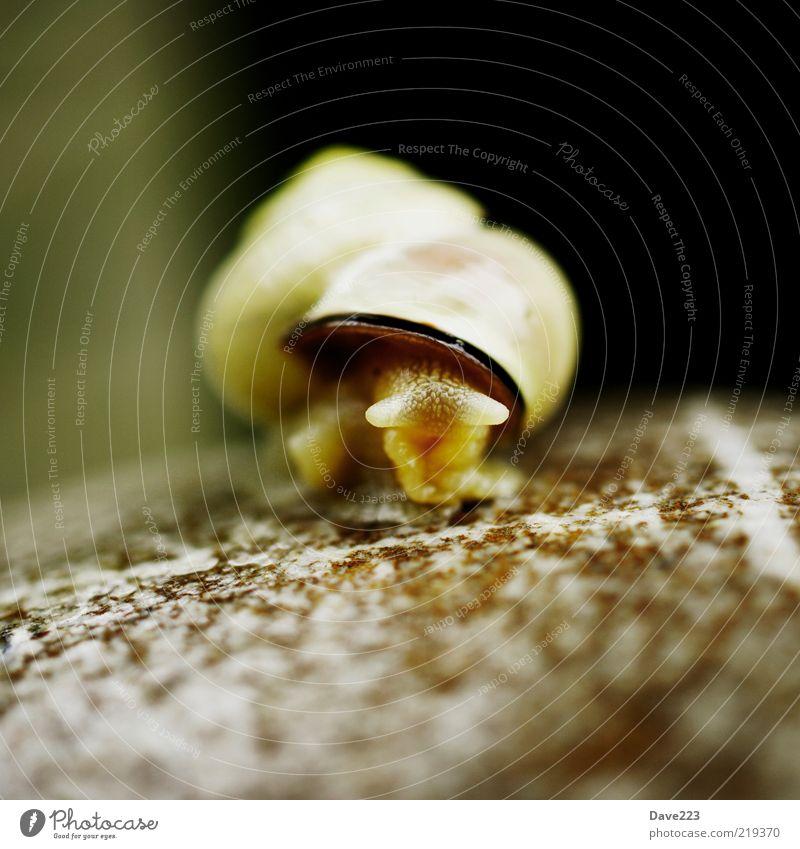 Animal Stone Brown Small Wild animal Snail Slimy Snail shell