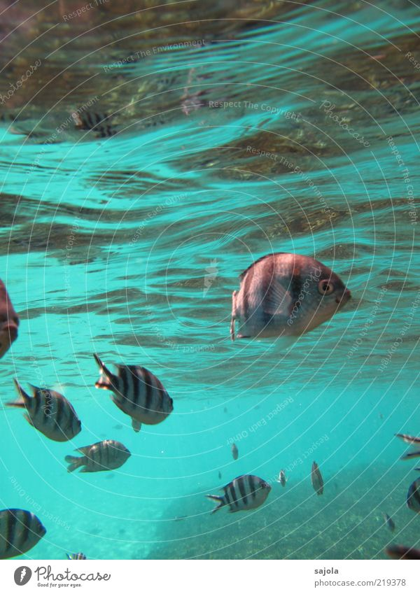 striped fishes Nature Animal Water Ocean Wild animal Fish Group of animals Flock Waves Curiosity Colour photo Underwater photo Full-length Looking