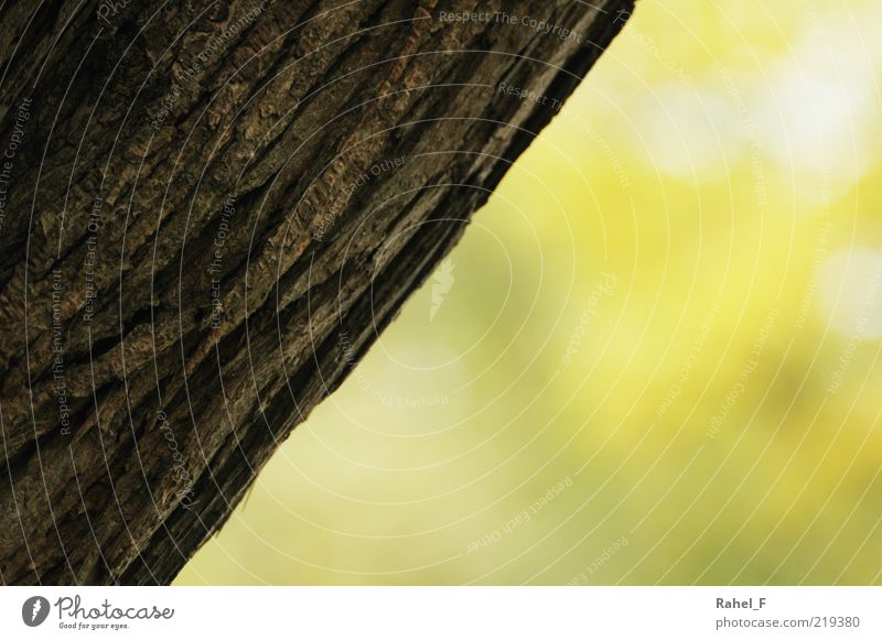 Nature Tree Calm Yellow Brown Fresh Growth Simple Diagonal Positive Partially visible Tree bark Section of image