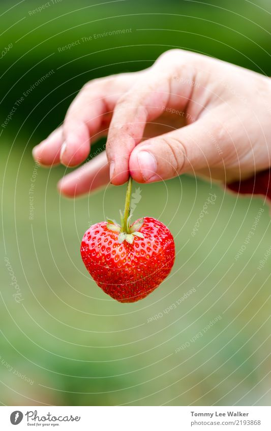 Love in your hands Dessert Nutrition Summer Parenting Infancy Hand Fingers Heart Fresh Delicious Positive Juicy Beautiful Warmth Green Red Romance Truth Honest