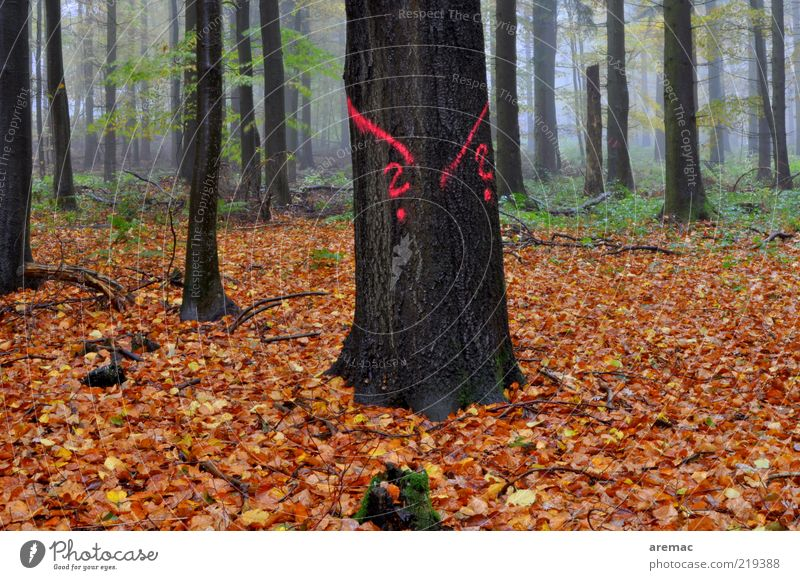 At a loss in the forest Nature Landscape Plant Autumn Bad weather Fog Rain Tree Leaf Forest Wood Sign Old Dark Brown Deciduous tree Deciduous forest