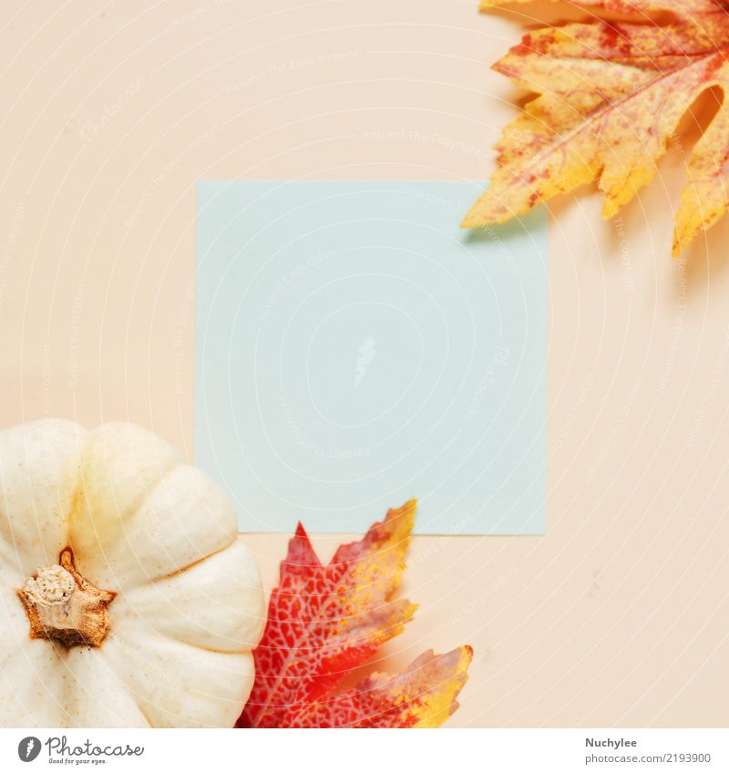 Bฺlank paper with autumn leaves and pumpkin Lifestyle Style Design Beautiful Decoration Thanksgiving Hallowe'en Art Nature Plant Autumn Leaf Fashion Paper
