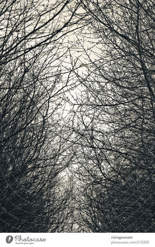 Forest & Trees Environment Nature Winter Esthetic Dark Cold Gray Black White Climate Moody Bleak Black & white photo Abstract Deserted Twilight Shadow Contrast