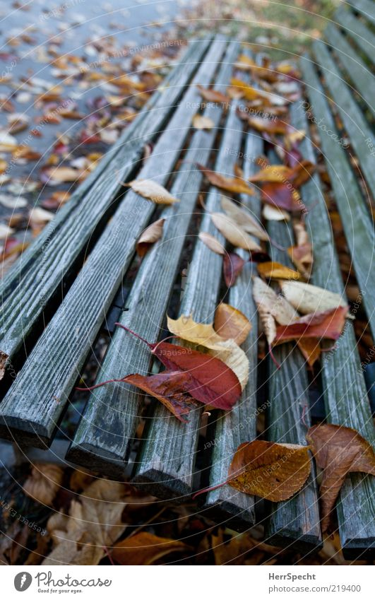 Leaf Yellow Autumn Wood Park Brown Gloomy Partially visible Section of image Wood grain Autumn leaves Weathered Autumnal Park bench Wooden bench