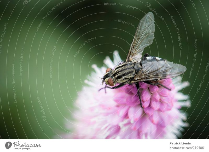 Nature Beautiful Flower Green Plant Summer Eyes Animal Blossom Dream Legs Pink Fly Environment Sit Esthetic