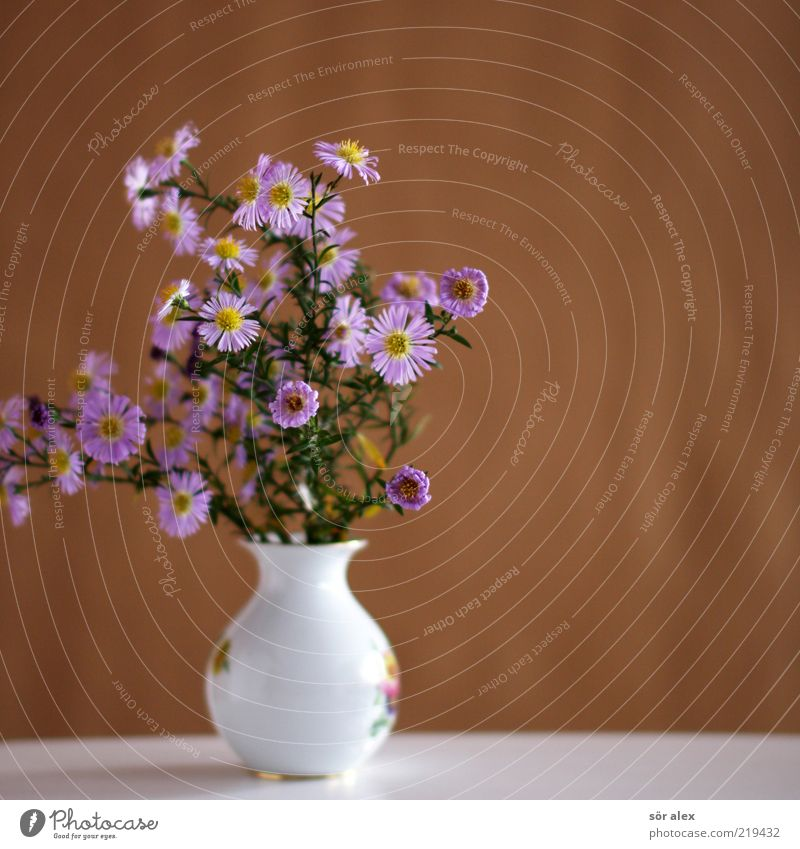 Plant Green Beautiful White Flower Leaf Blossom Spring Brown Pink Decoration Blossoming Violet Kitsch Bouquet Stalk