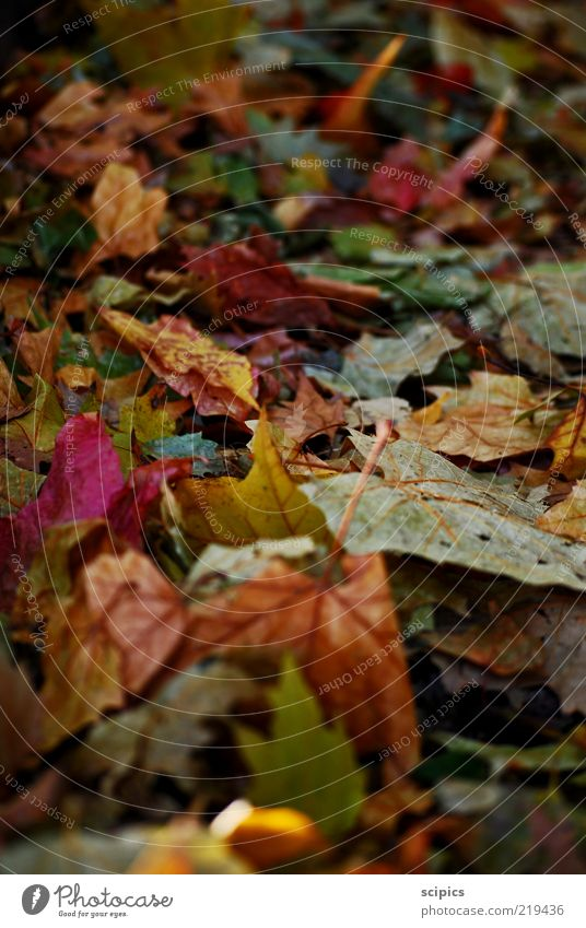 autumn foliage Nature Autumn Climate change Weather Leaf Lanes & trails Old Colour photo Multicoloured Exterior shot Close-up Detail Deserted Day Light Contrast