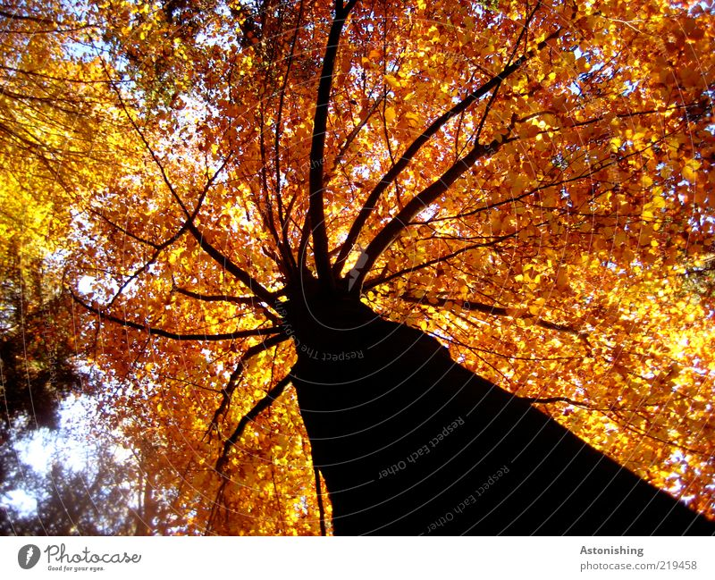 Sky Nature Tree Red Plant Leaf Black Forest Yellow Autumn Environment Line Weather Brown Gold Tall