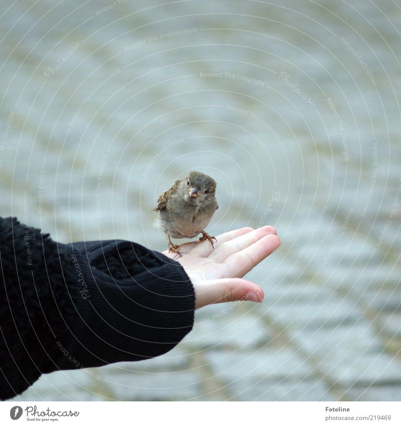 Human being Child Nature Hand Animal Bird Skin Arm Small Free Fingers Sit Trust Natural Wild animal To feed