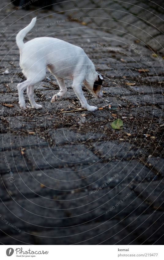 White Animal Street Dark Dog Stone Lanes & trails Search Pelt Curiosity Discover Odor Pet Tails Individual Intuition