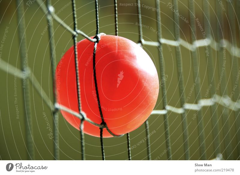 Caught in the net Leisure and hobbies Ball sports Sphere Astute Dangerous Bans Net Network Tennis Reticular Orange Red Catching net Loop Thrashing Adversity