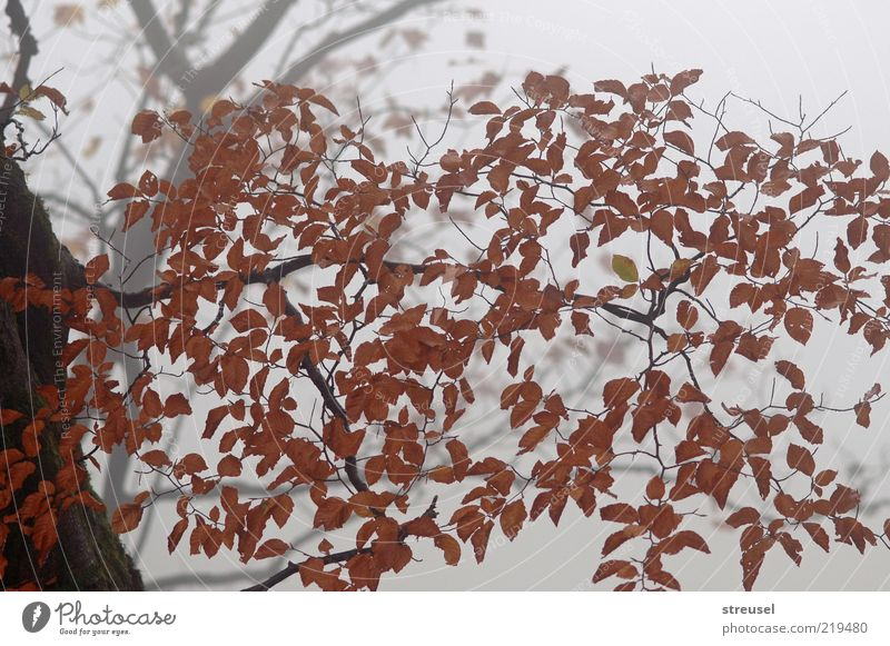 Nature Tree Plant Calm Leaf Autumn Wood Moody Brown Bright Fog Weather Environment Growth Gloomy Branch