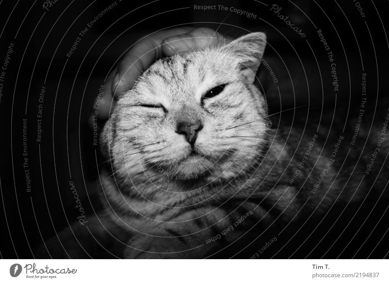 cat Animal Pet Cat Animal face 1 Communicate Safety Senses Contentment Black & white photo Interior shot Deserted Copy Space left Copy Space right