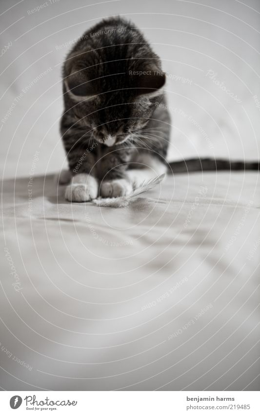 Where's the rest?! Pet Cat 1 Animal Disappointment Black & white photo Interior shot Animal portrait Domestic cat Kitten Baby animal Cute Downward