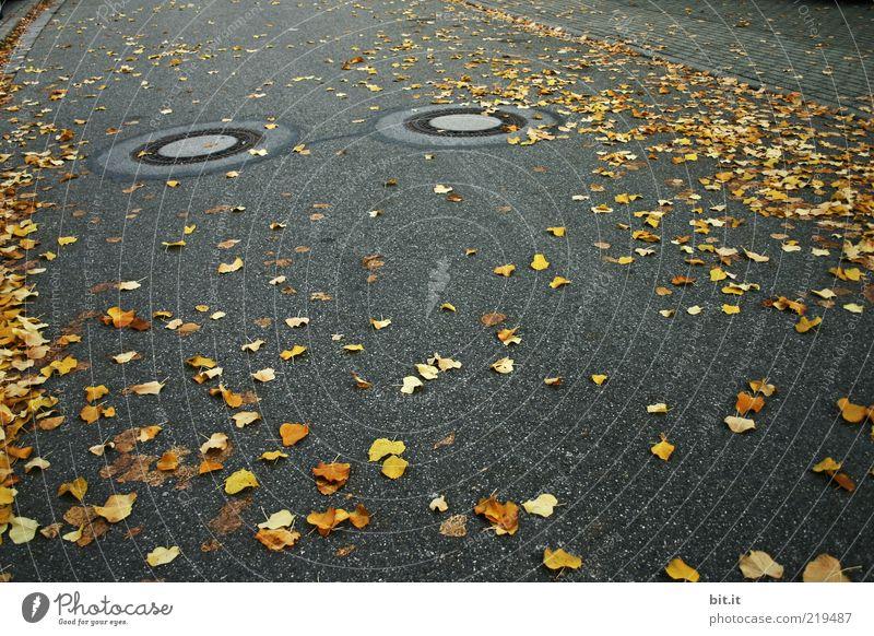 Leaf Black Yellow Autumn Street Dark Environment Gray Gold Illuminate Round Asphalt Under Traffic infrastructure Double exposure Autumn leaves