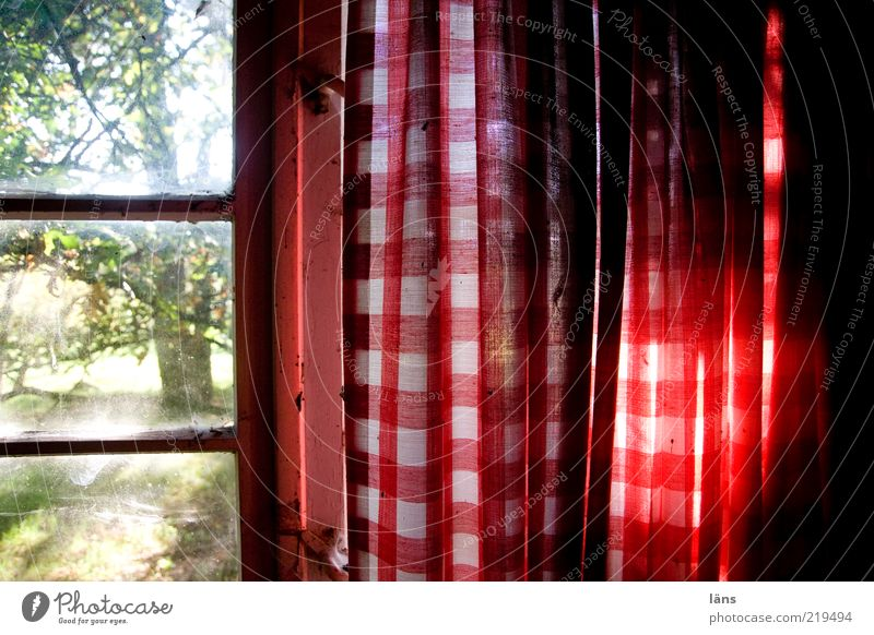 outlook Window Old Authentic Dirty Red Curtain Checkered Colour photo Interior shot Close-up Detail Pattern Structures and shapes Deserted Day Sunlight Sunbeam