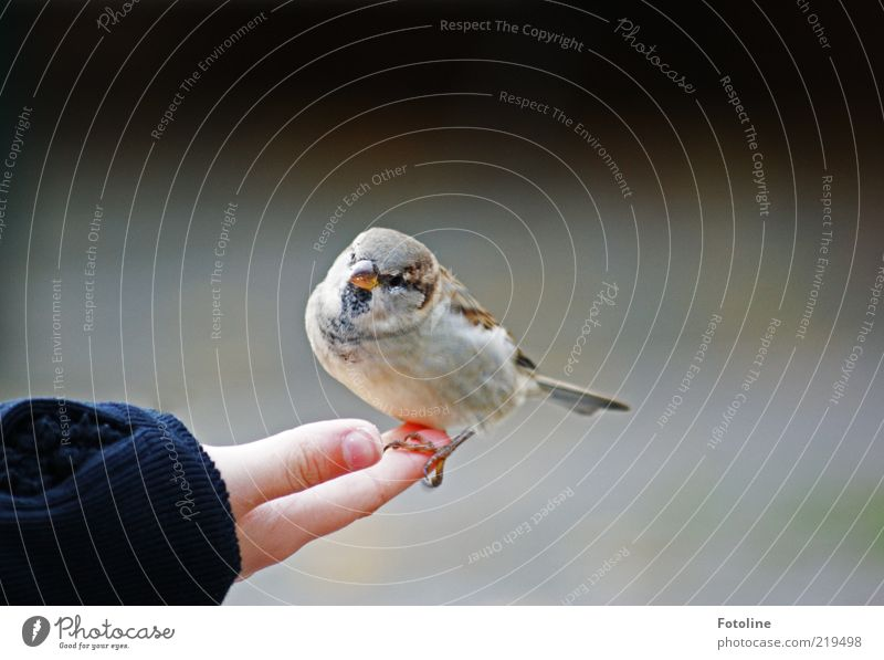 Human being Child Nature Hand Animal Bright Bird Skin Arm Small Environment Fingers Sit Near Feather Natural