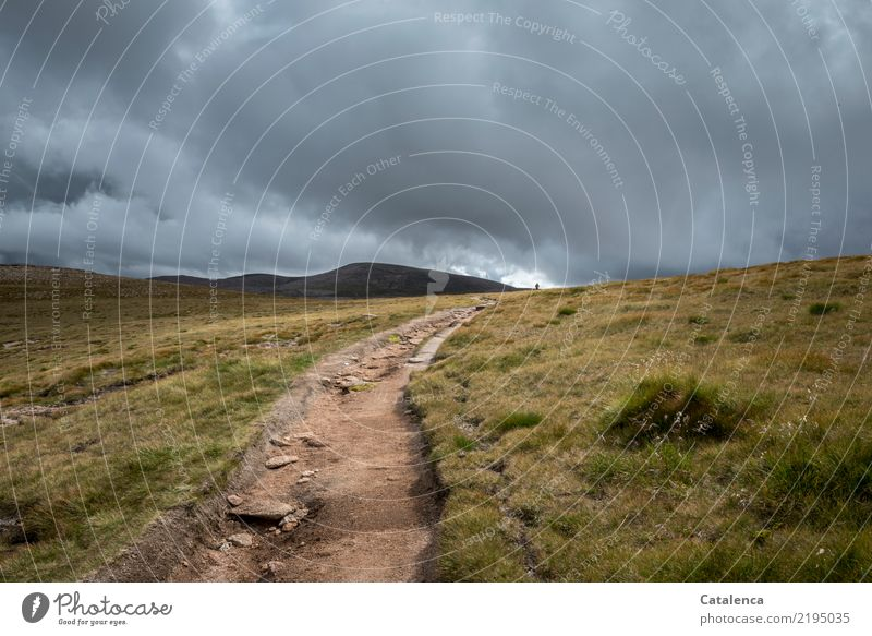 walk Mountain Hiking Androgynous 1 Human being Storm clouds Summer Bad weather Grass Highlands Scotland Lanes & trails Footpath Going Large Cold Brown Gray