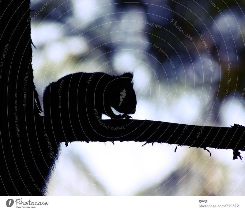 Nature Tree Animal Dark Small Environment Sit Branch Wild Natural Pelt Wild animal Cute Motionless Squirrel