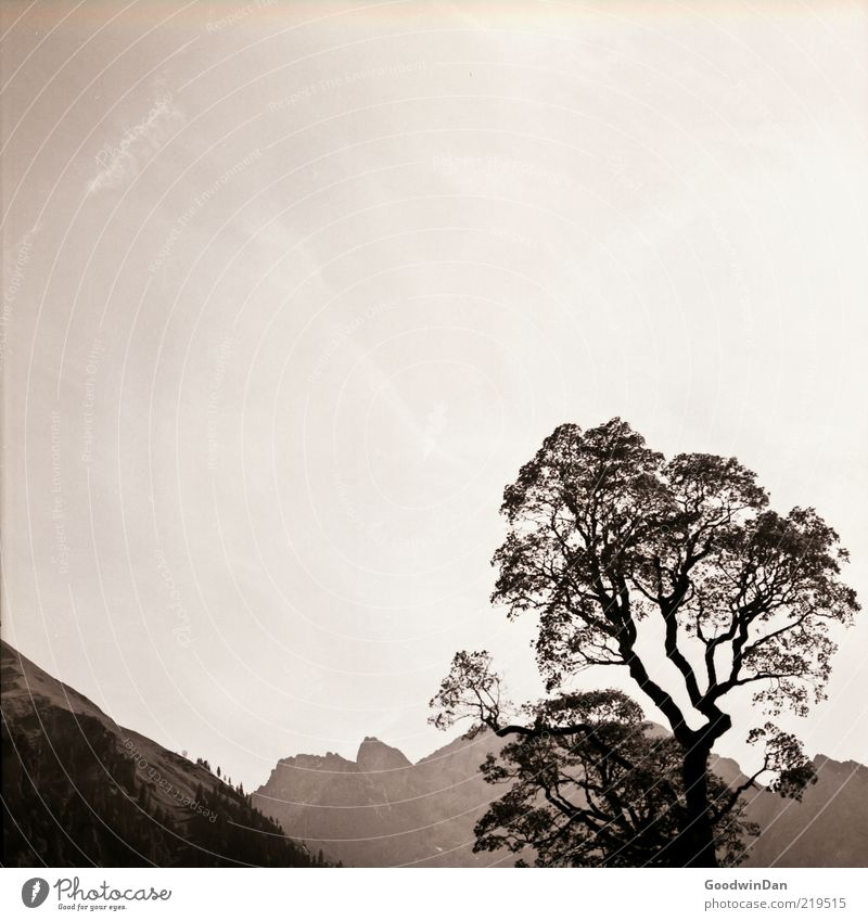 Nature Sky Tree Plant Mountain Freedom Landscape Moody Environment Large Authentic Simple Hill Treetop