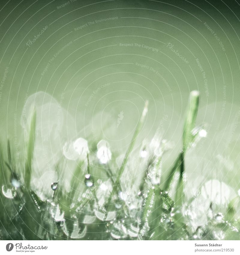 Nature Water Plant Meadow Grass Glittering Wet Drops of water Earth Stalk Damp Dew Blade of grass Light Lens flare