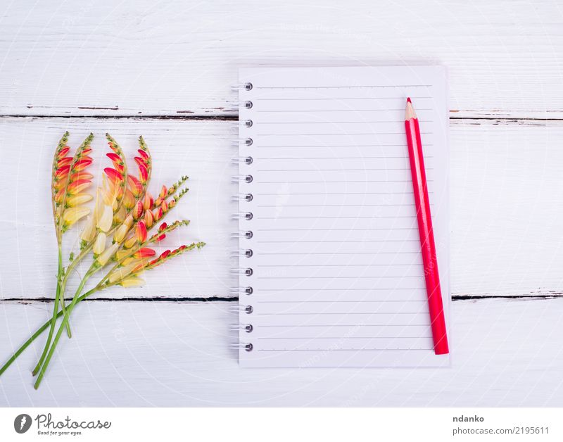 empty notebook in a line White Flower Red Yellow Wood Business School Office Open Paper Clean Write Document Drawing Know Pencil