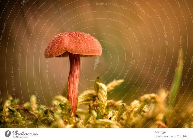 like an A Nature Plant Animal Autumn Moss Park Forest Observe Eating Growth Mushroom Mushroom cap Mushroom picker Mushroom soup Colour photo Subdued colour